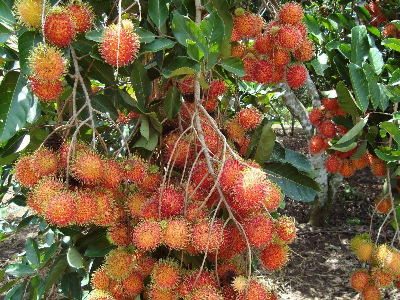 Miền Tây mùa quả ngọt