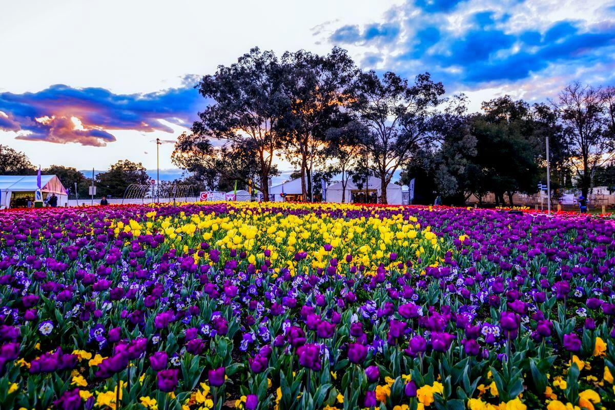 Lễ hội Floriade chào đón mùa xuân Úc