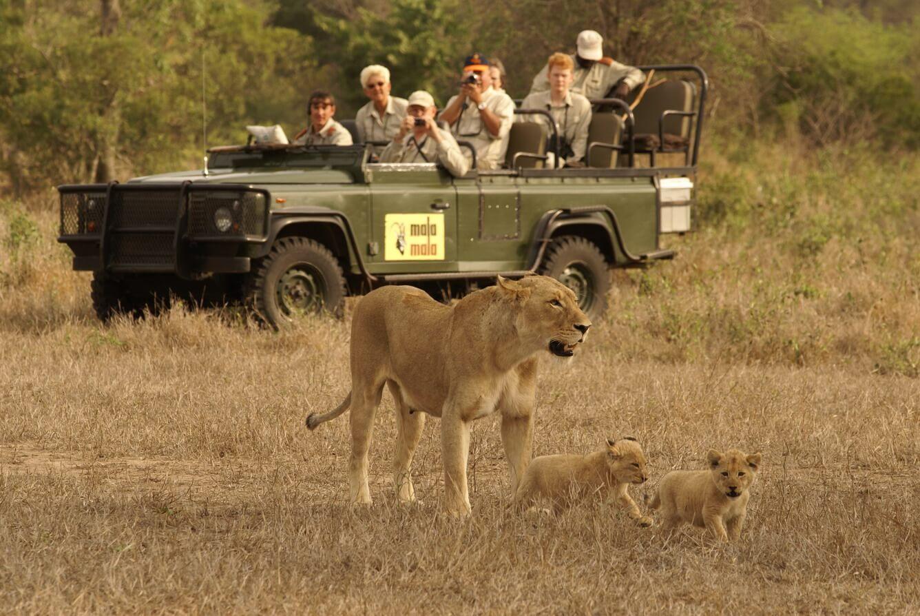 """Đi Nam Phi săn ảnh """"năm ông lớn"""""""