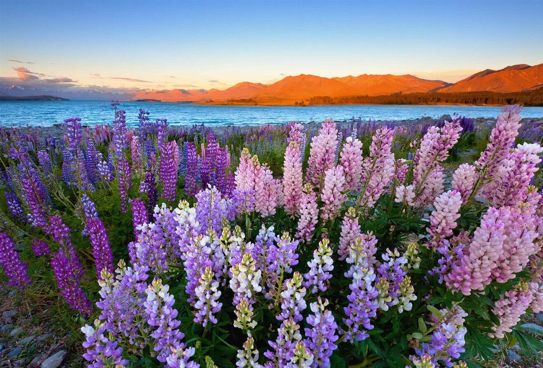 New Zealand vẻ đẹp diệu kỳ