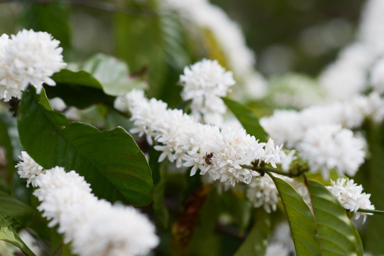 Ngắm hoa tuyết phủ trắng đồi đất đỏ