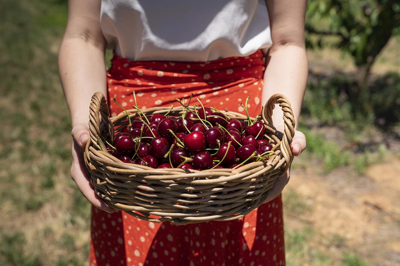 Cuối tuần này, mình đi hái cherry