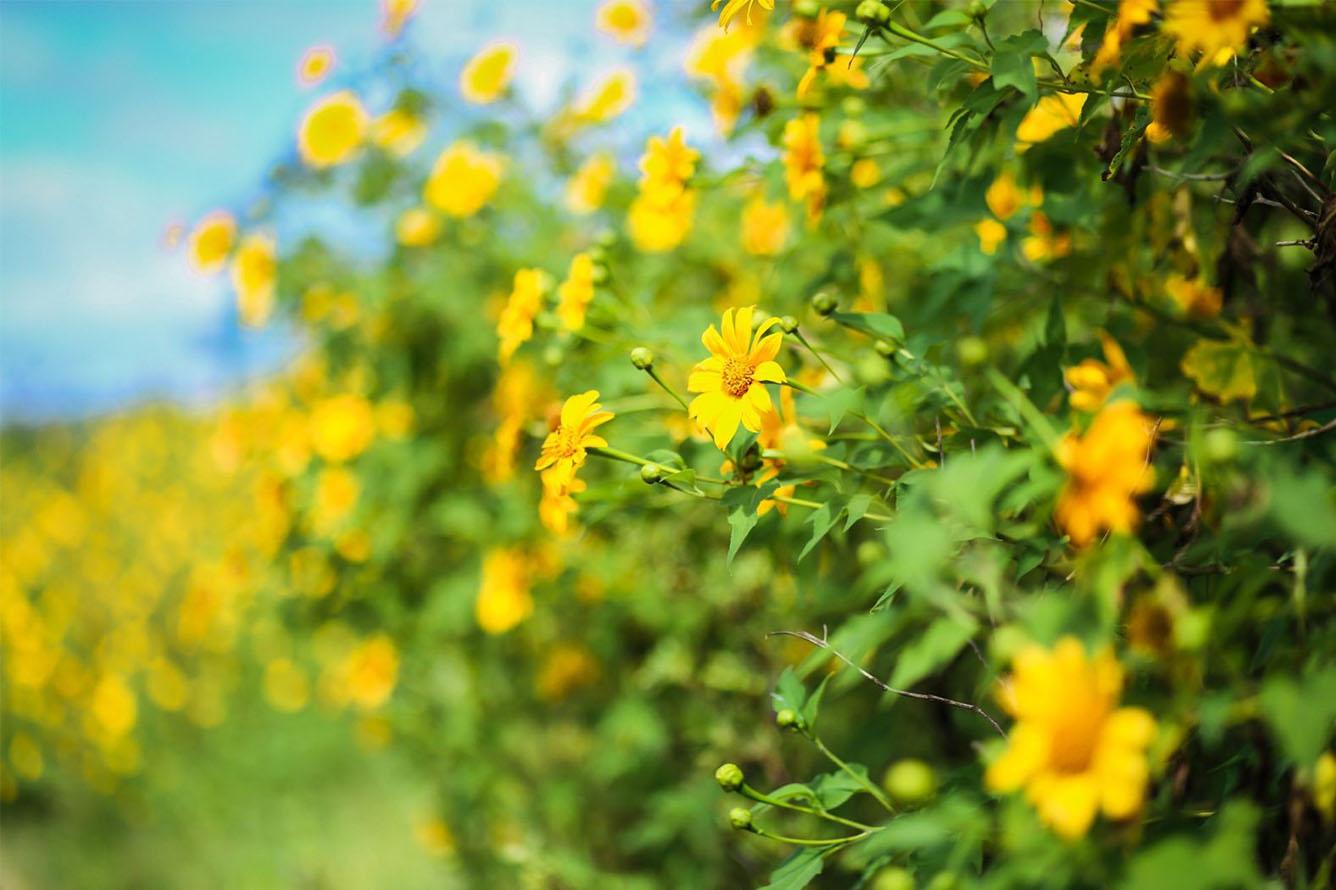 """""""Hoa nắng"""" giữa đại ngàn Tây Nguyên"""