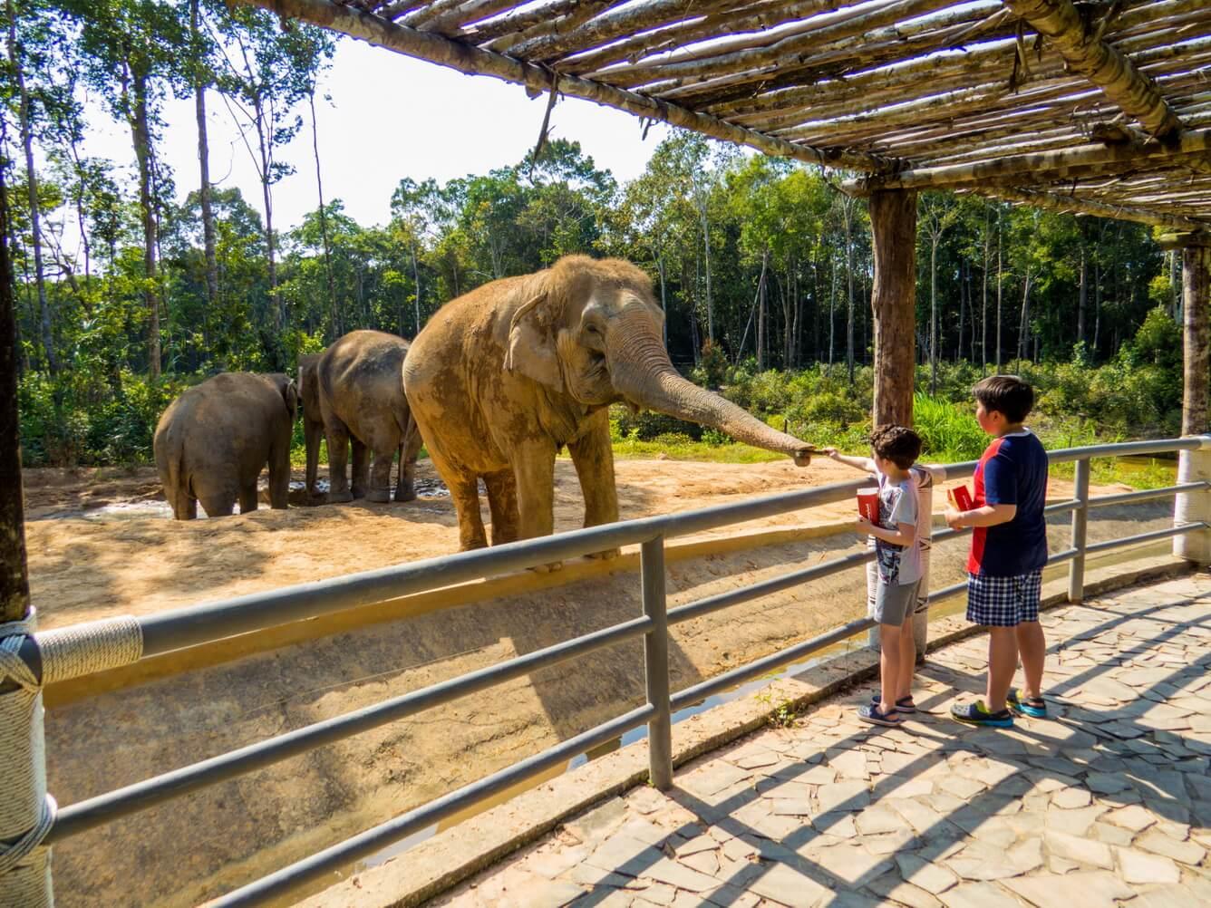 Nghỉ dưỡng đẳng cấp tại VinOasis Phú Quốc 5*, thỏa sức vui chơi tại Vinwonder và vườn thú Safari