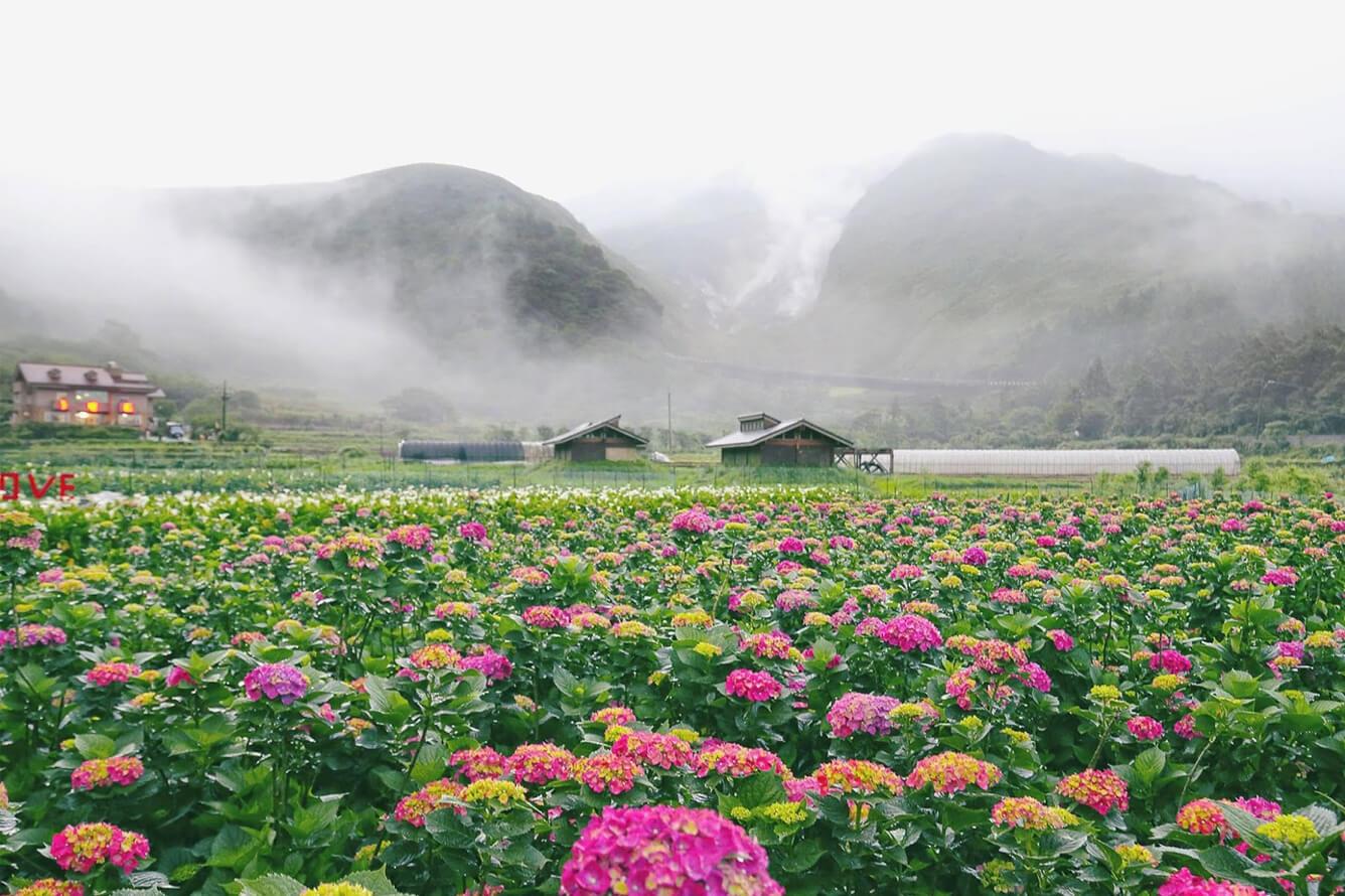 Dương Minh Sơn - Thơm ngát hương thu Đài Loan