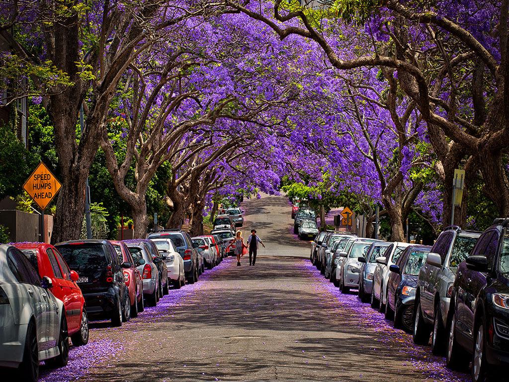 """Vẻ đẹp """"hoang dã"""" của Nam Phi"""
