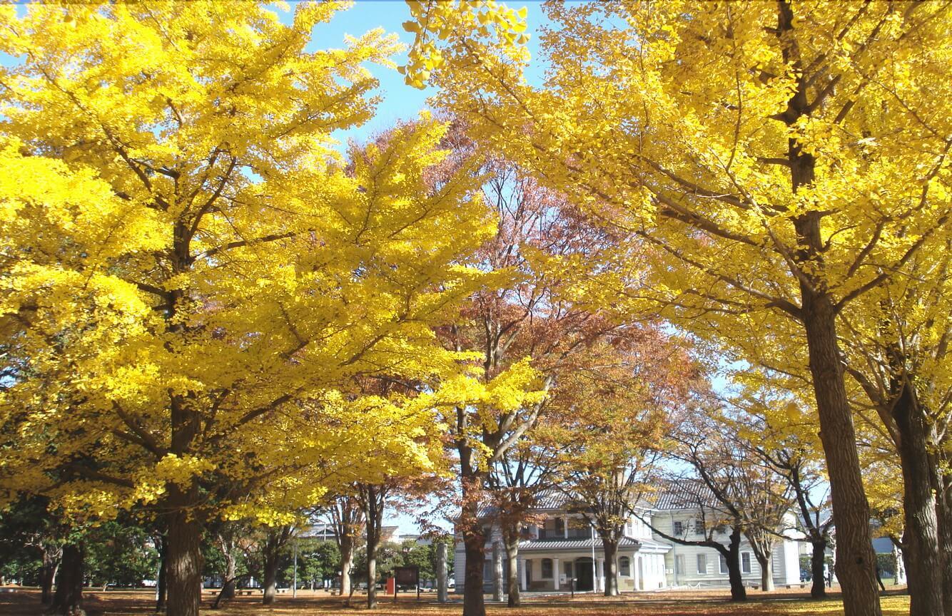 Bảo tàng lịch sử tỉnh Ibaraki