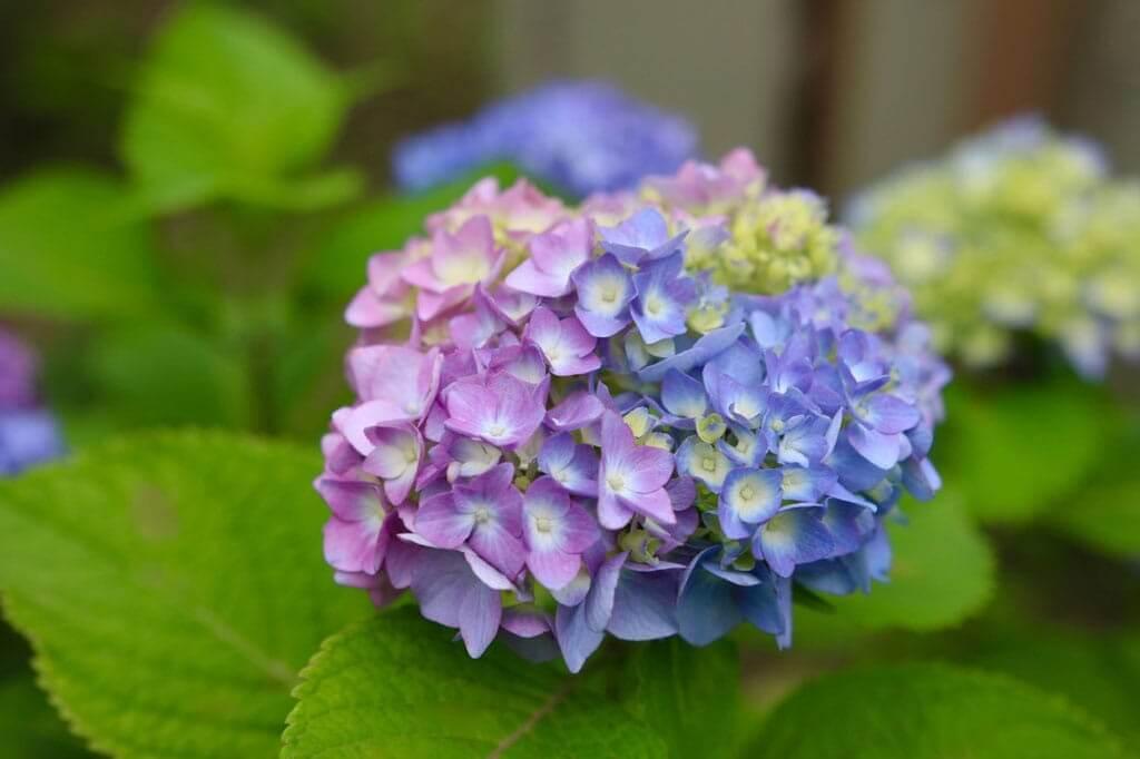 Những sắc màu hoa Nhật Bản