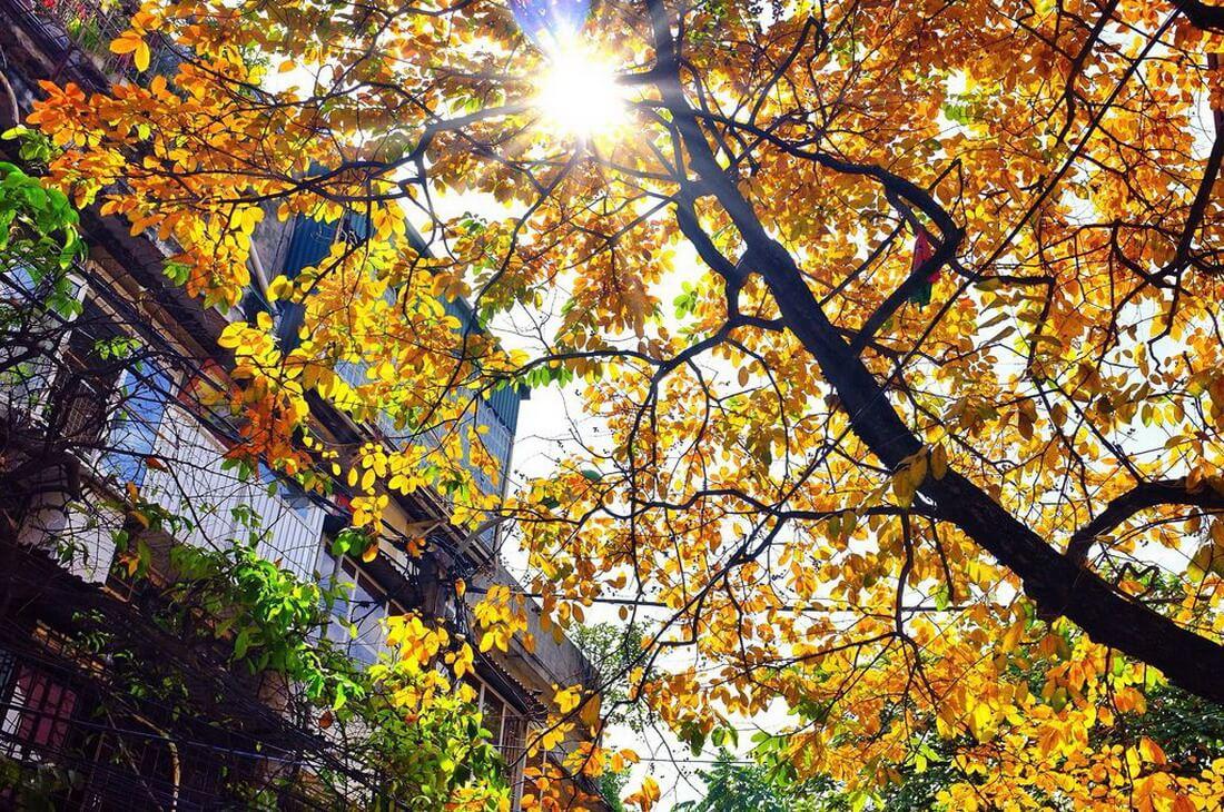 Mùa thu Hà Nội có gì đặc biệt?