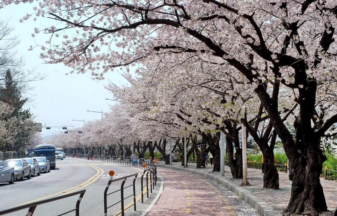 Tới Seoul thưởng thức Wakko
