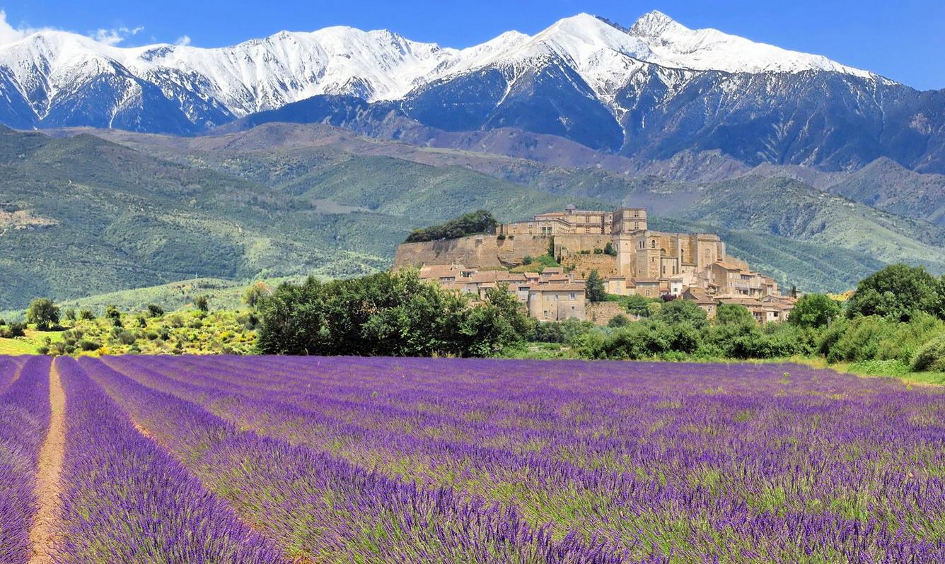 """""""Thiên đường màu tím"""" vùng Provence (Pháp)"""