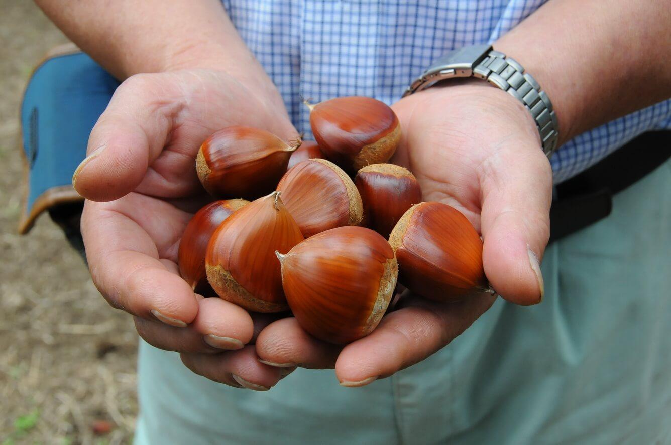 'Săn' trái cây ở 'vương quốc' trái cây Ibaraki