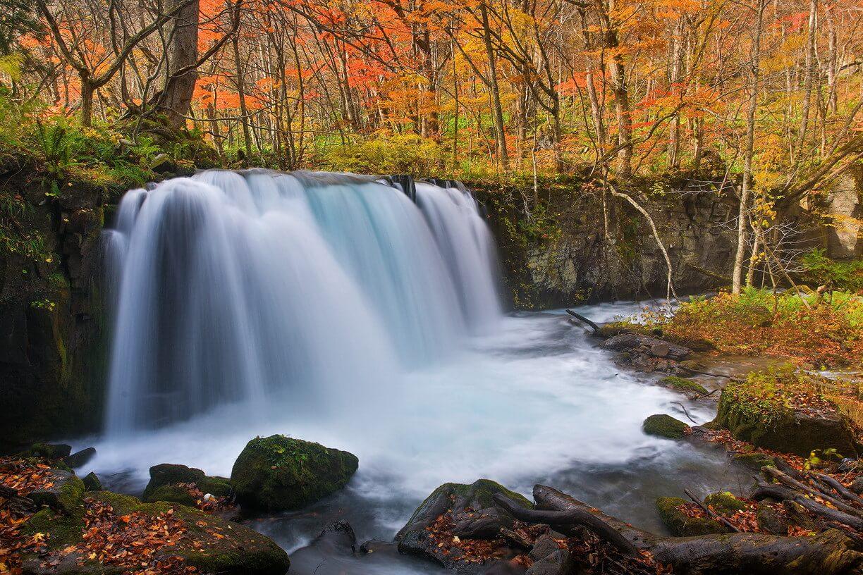 2. Lá mùa thu ở hồ Towada và hẻm núi Oirase (Tỉnh Aomori)