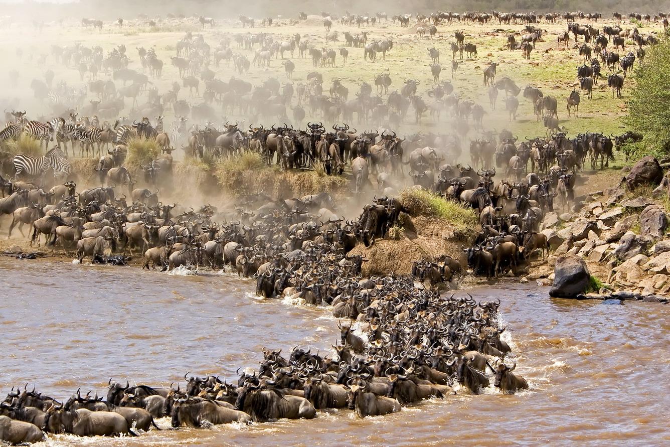 Phi Châu - Tiếng gọi nơi hoang dã