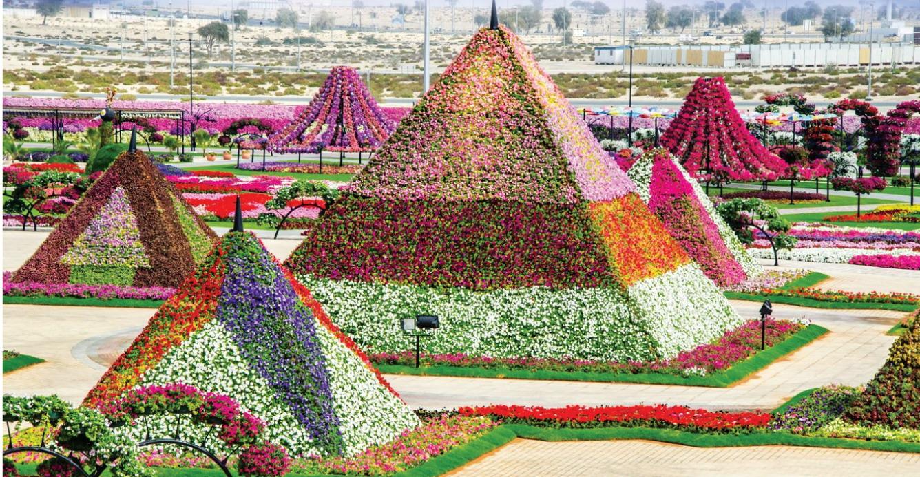 Ngàn hoa khoe sắc giữa sa mạc Trung Đông