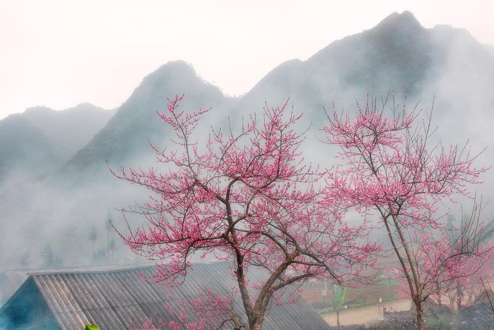 Khám phá Đông Bắc mùa hoa đào