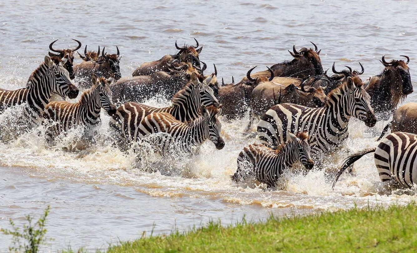 Đến Kenya săn ảnh thiên nhiên