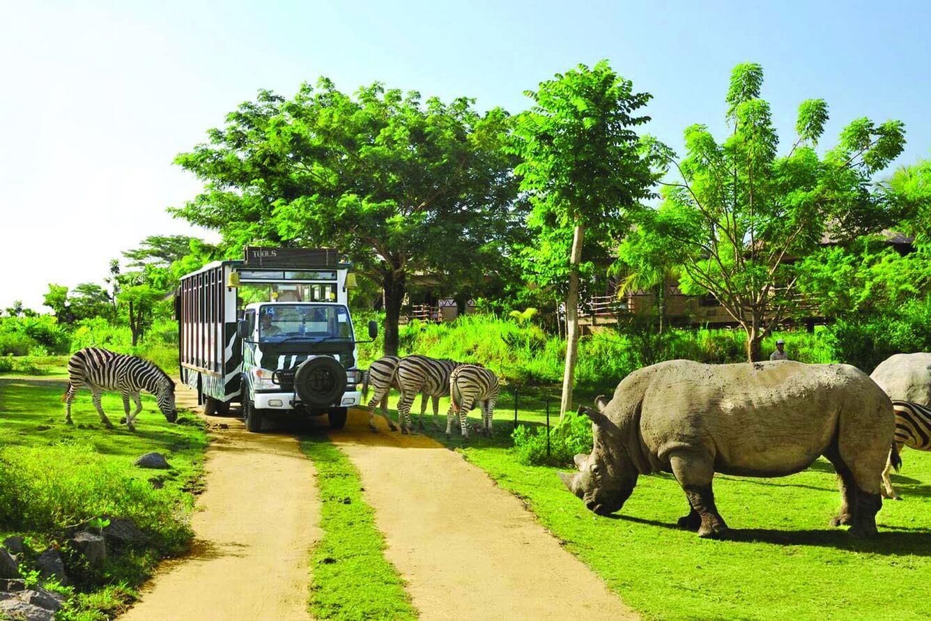 Safari - Thiên nhiên hoang dã giữa lòng Phú Quốc