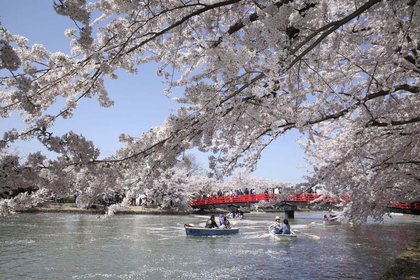 3. Hoa anh đào ở lâu đài Hirosaki (Tỉnh Aomori)