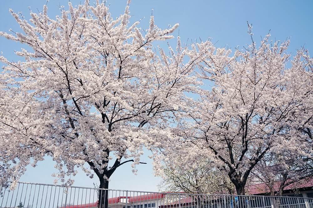 Vietravel phối hợp cùng Vietjet tổ chức tour đến Fukushima với giá tốt nhất thị trường