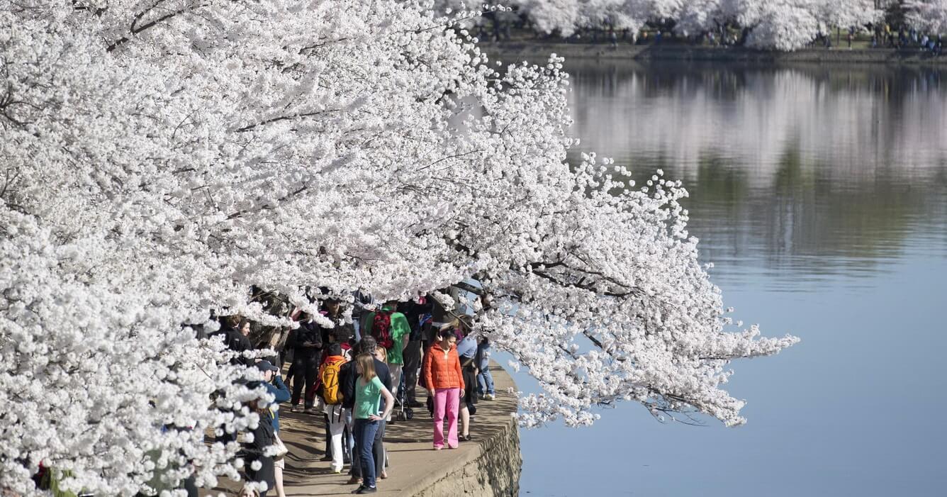 Những 'cõi tình' mùa xuân