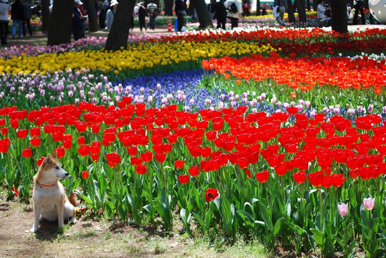 3. Một ngàn lẻ một sắc màu tulip