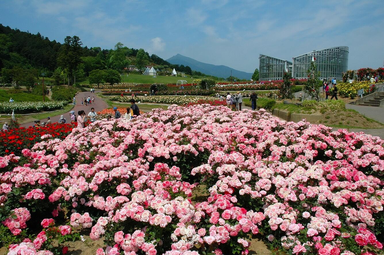 Mùa thu hút đông đảo khách du lịch nước ngoài vào Nhật Bản đã đến