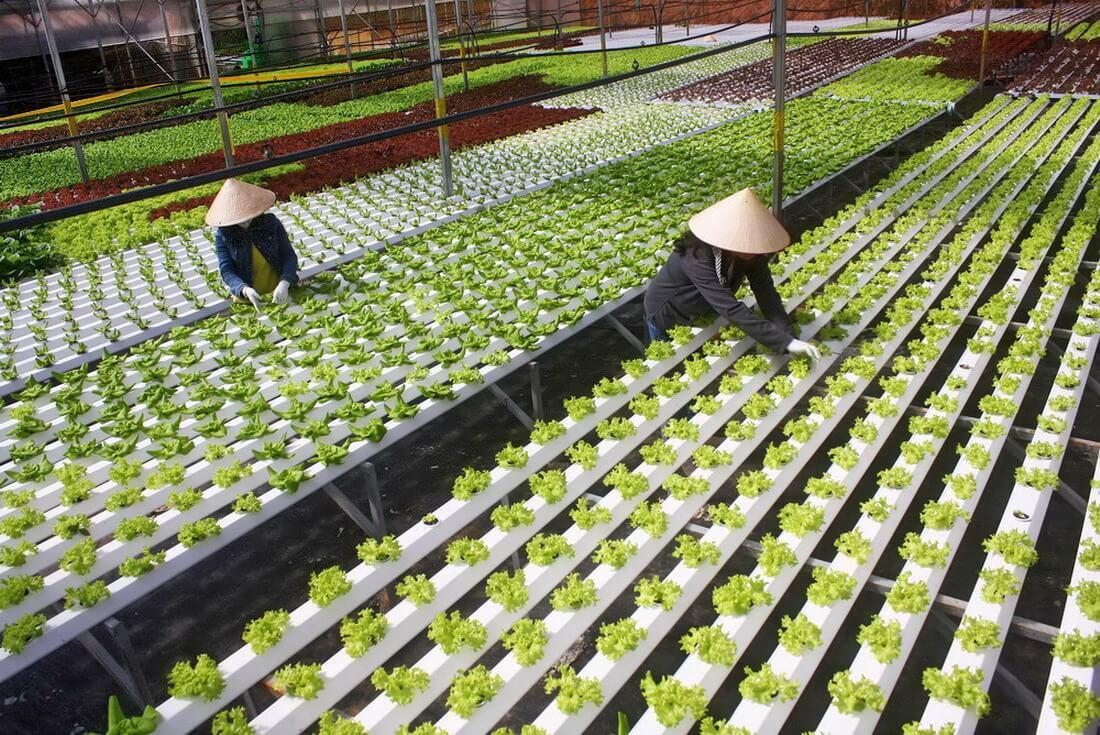 Các điểm tham quan nông nghiệp vùng cao