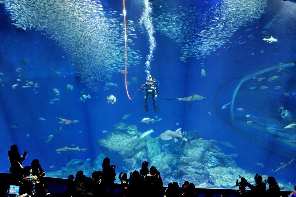 Thủy cung Aquaworld Ibaraki Oarai: bể cá mập với nhiều loại cá nhất Nhật Bản