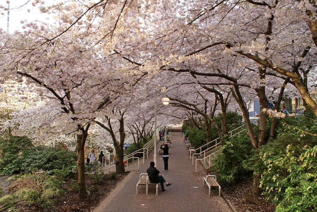 Ngắm thiên đường hoa xuân thế giới