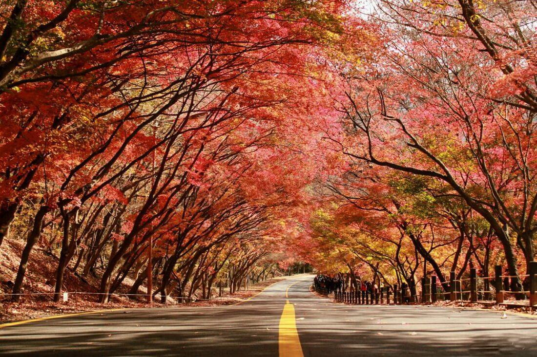 4. Vườn quốc gia Naejangsan (Jeollabuk-do)
