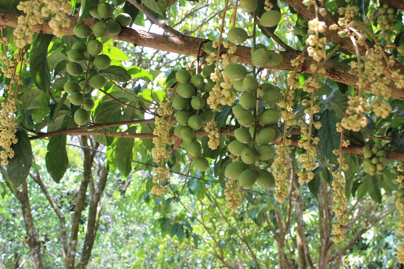 Ngọt lành cây trái miệt vườn