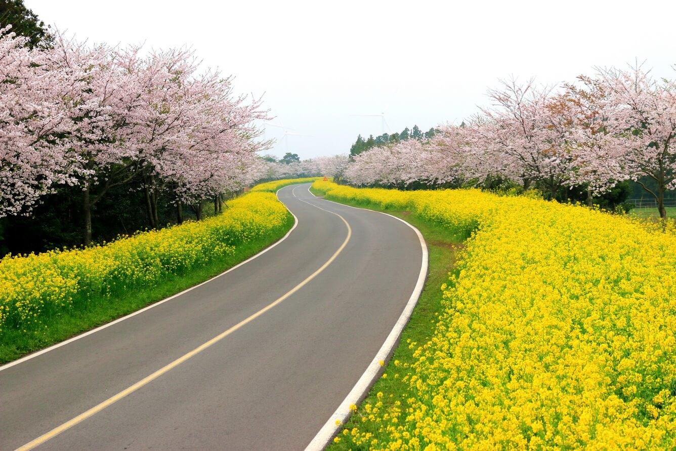 5. Đảo Jeju (Hàn Quốc)