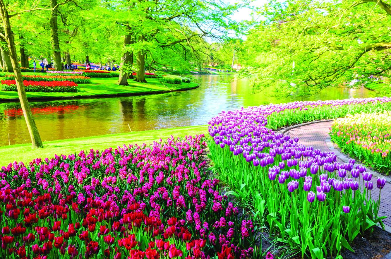 """""""Lạc lối"""" giữa thiên đường hoa tulip"""