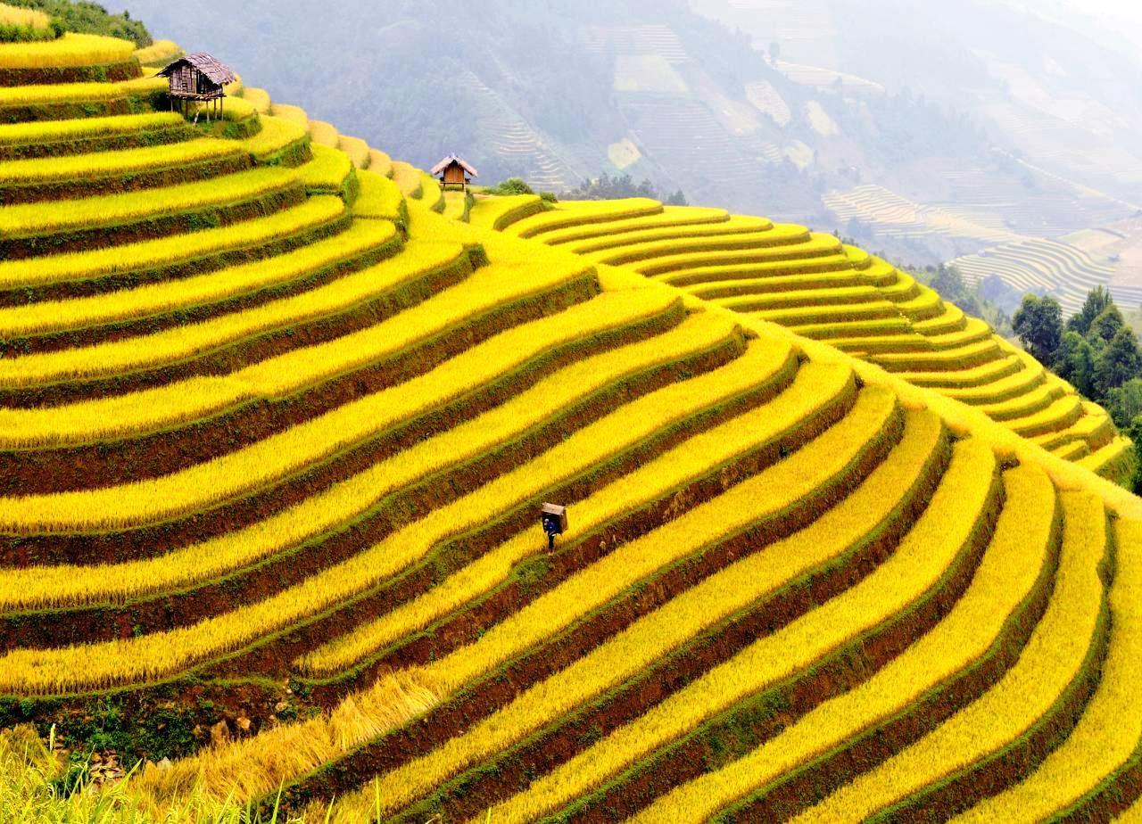 Cung đường vàng mùa lúa chín đẹp nhất Miền Bắc