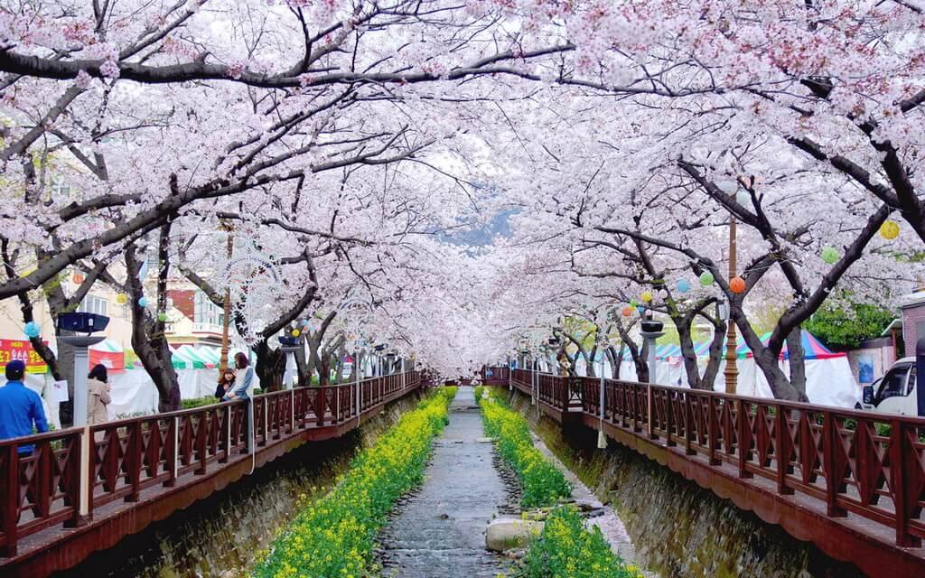 6. Quận Jinhae, Gyeongsang (Hàn Quốc)