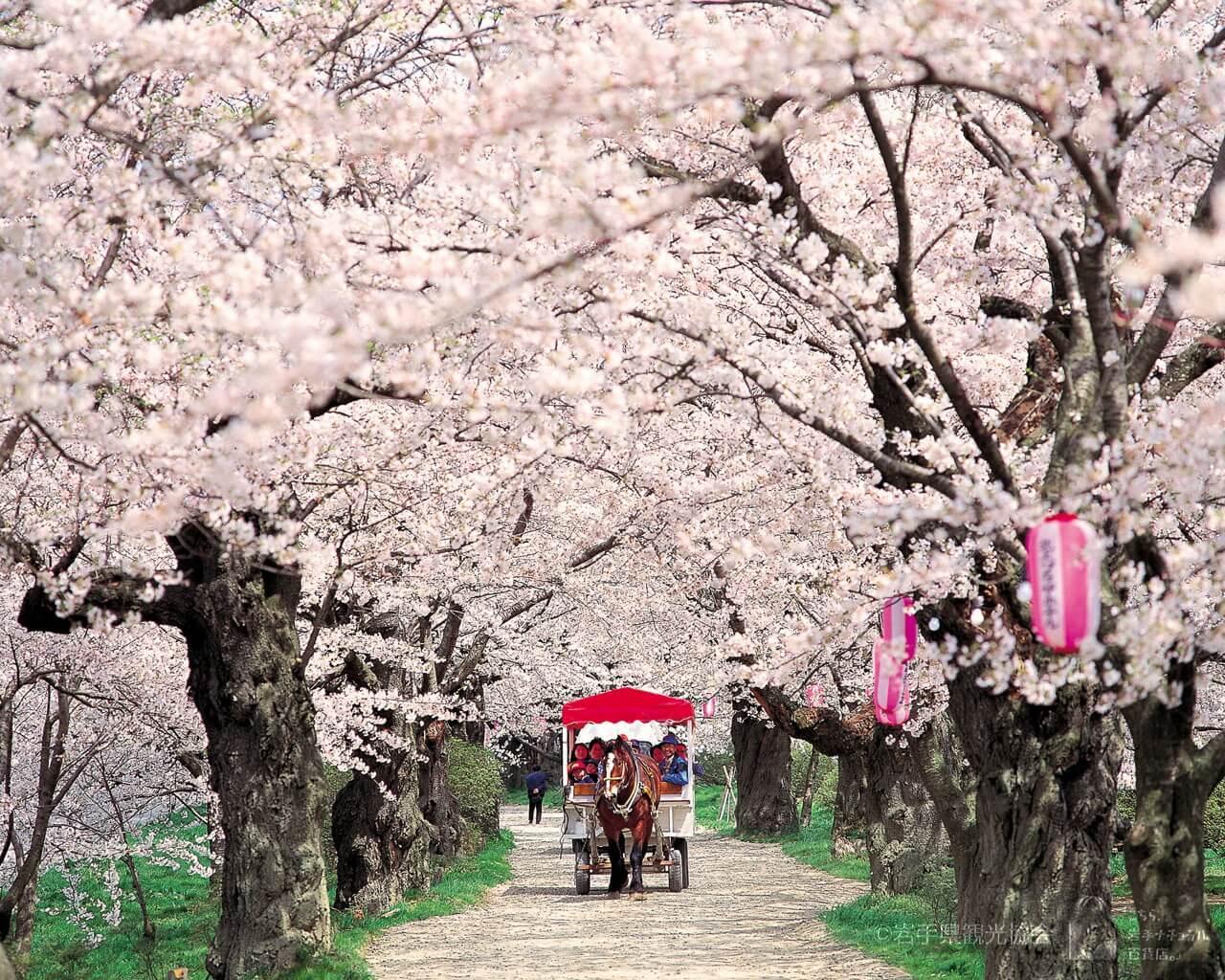 6. Kitakami Tenshochi  (Tỉnh Iwate)