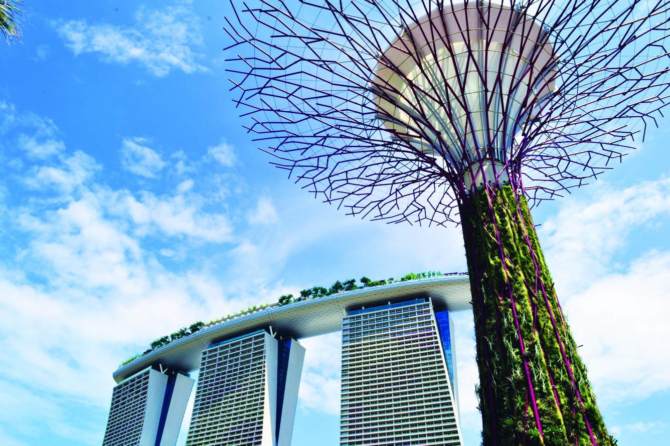7.    Chiêm ngưỡng siêu cây
