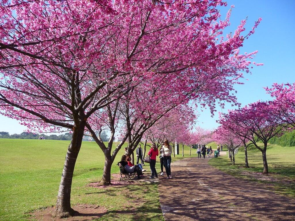 8. Vườn bách thảo Curitiba (Brazil)