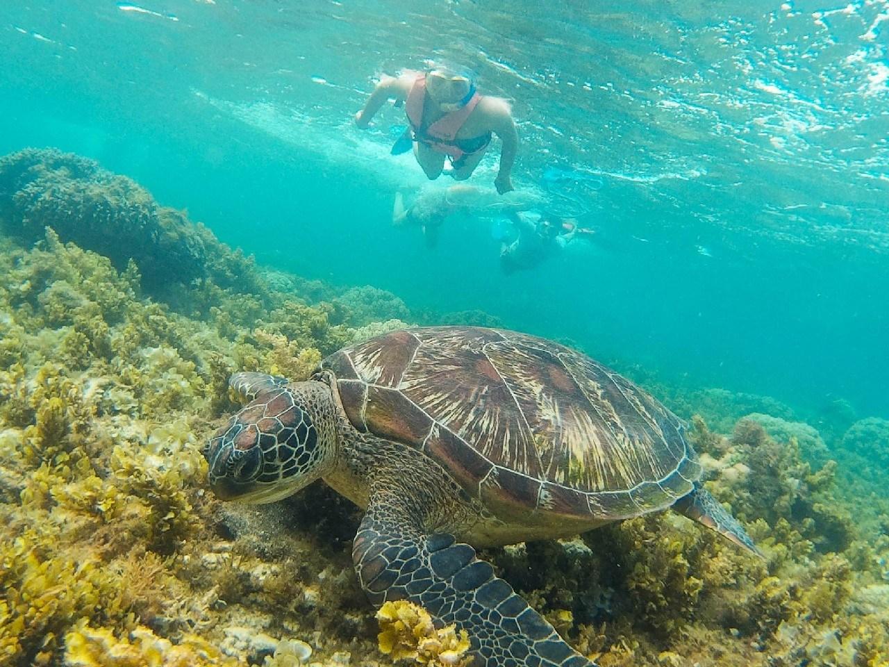 7. Apo Island, Dumaguete