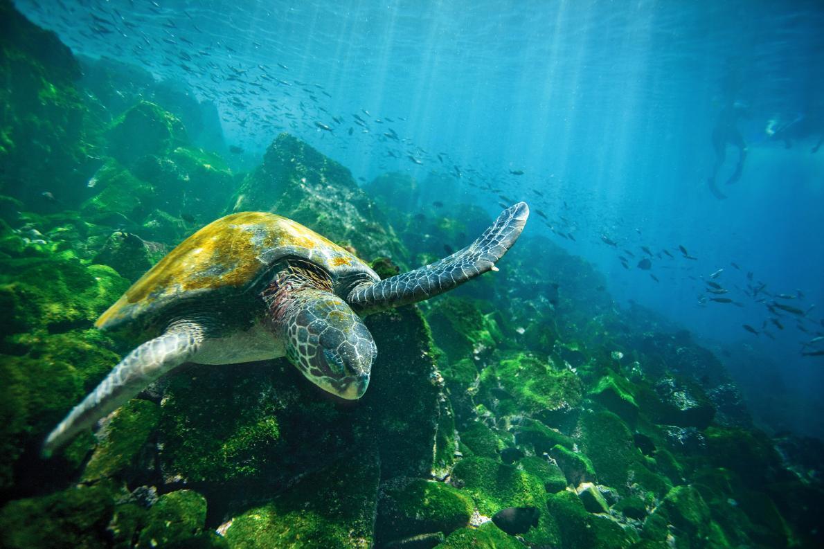 3. Galapagos Islands