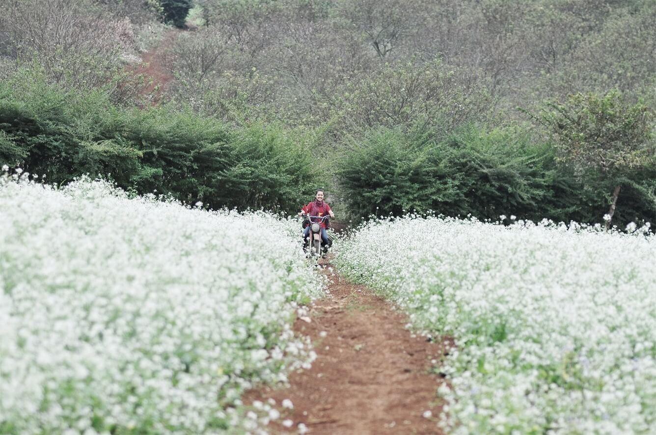 Điện Biên - Mùa hoa cải khoe sắc