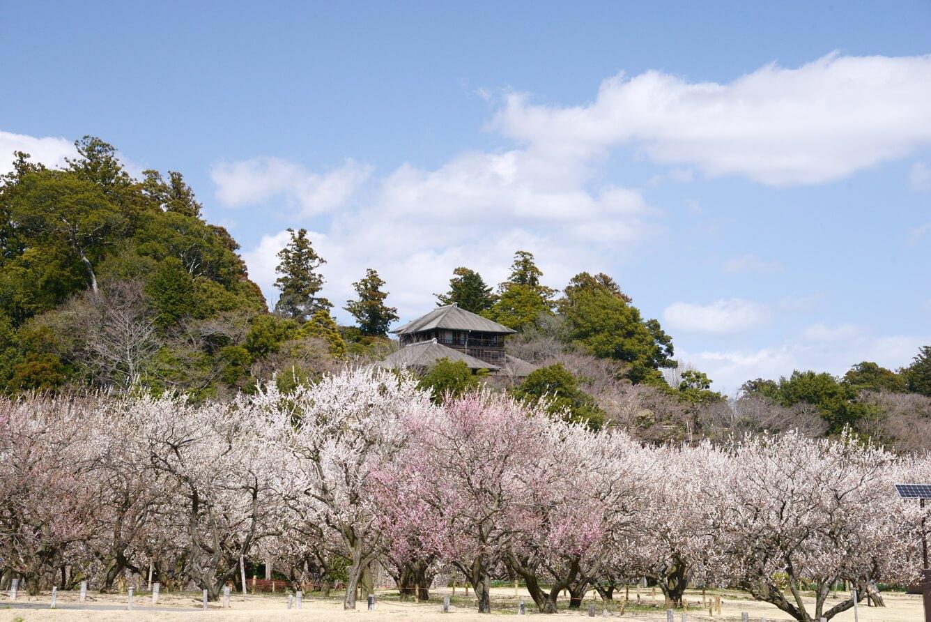 1. Mùa xuân nhuộm hồng di sản văn hóa, một trong ba khu vườn nổi tiếng nhất Nhật Bản, nơi có lễ hội hoa Ume lớn nhất của Ibaraki.