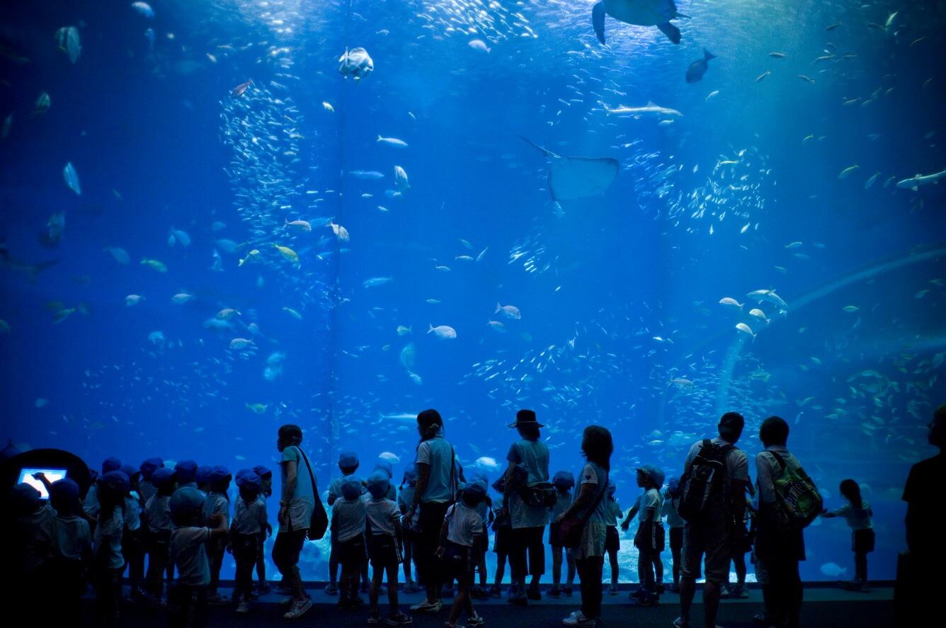Aqua World Thủy cung Oarai Tỉnh Ibaraki