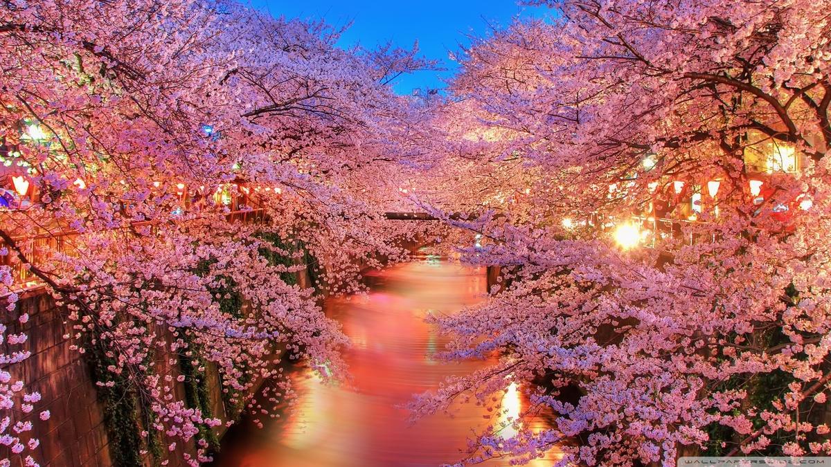 Hanami – a Festival of Beauty