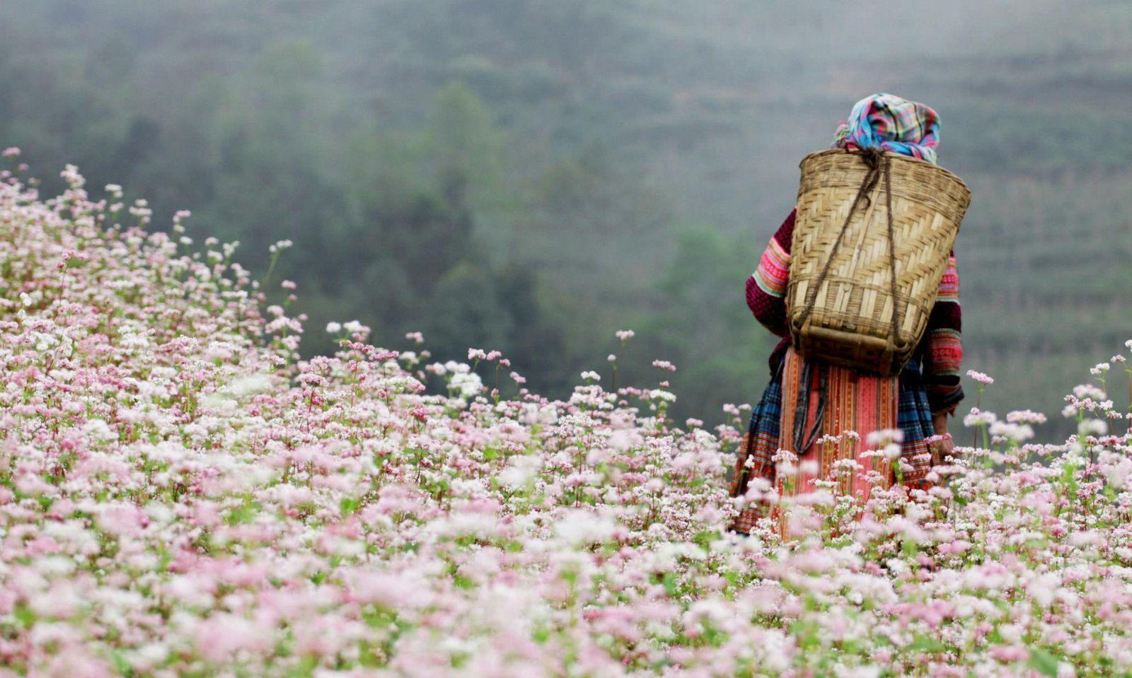 1. The Buckwheat blossom