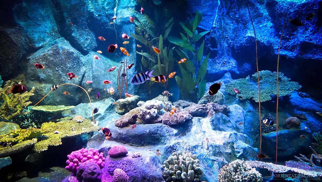 8. Underwater World Pattaya