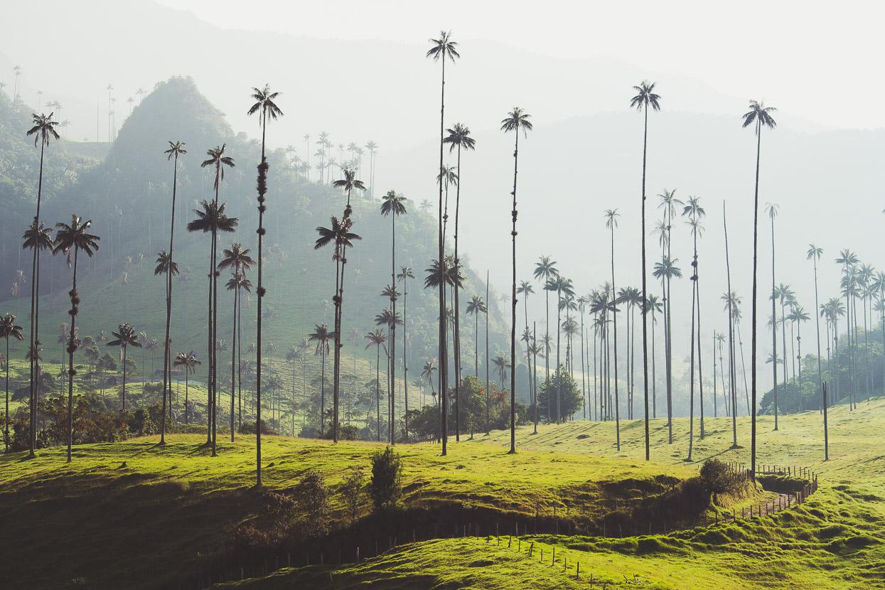 10. Valle de Cocora