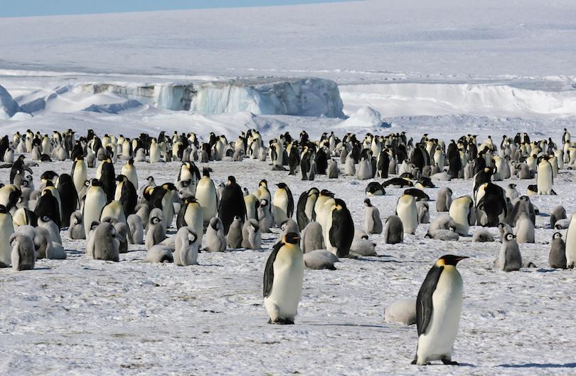 8. Antarctica
