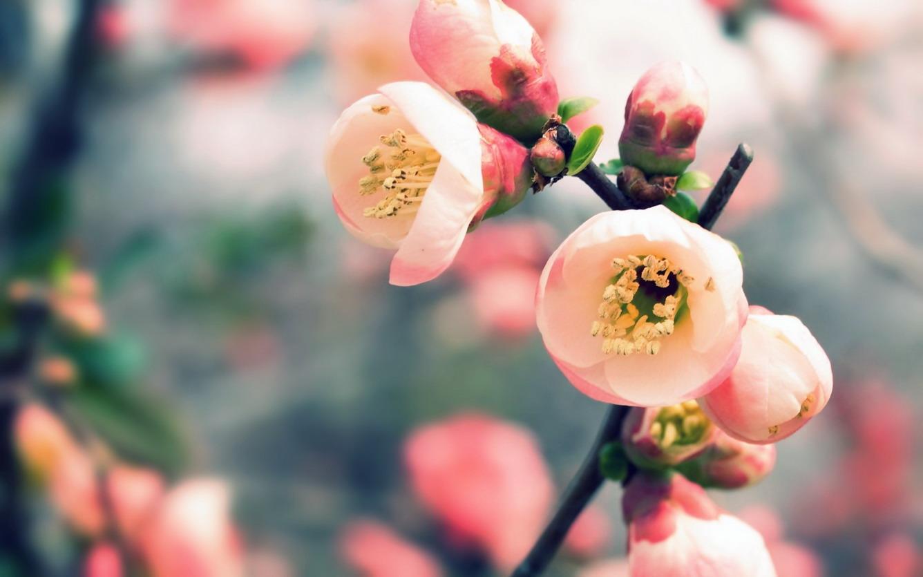 Chào mùa yêu thương